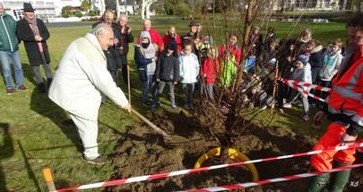 PLANTATION D'UN MÉTASÉQUOIA AU PARC THERMAL D'ARGELES-GAZOST